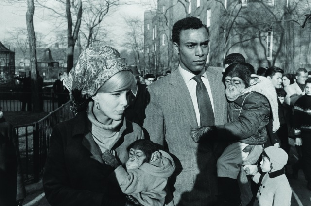 Garry Winogrand, Central Park Zoo, New York, 1967; gelatin silver print; Collection of Randi and Bob Fisher; © The Estate of Garry Winogrand, courtesy Fraenkel Gallery, San Francisco